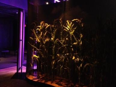 Ominous mourning corn